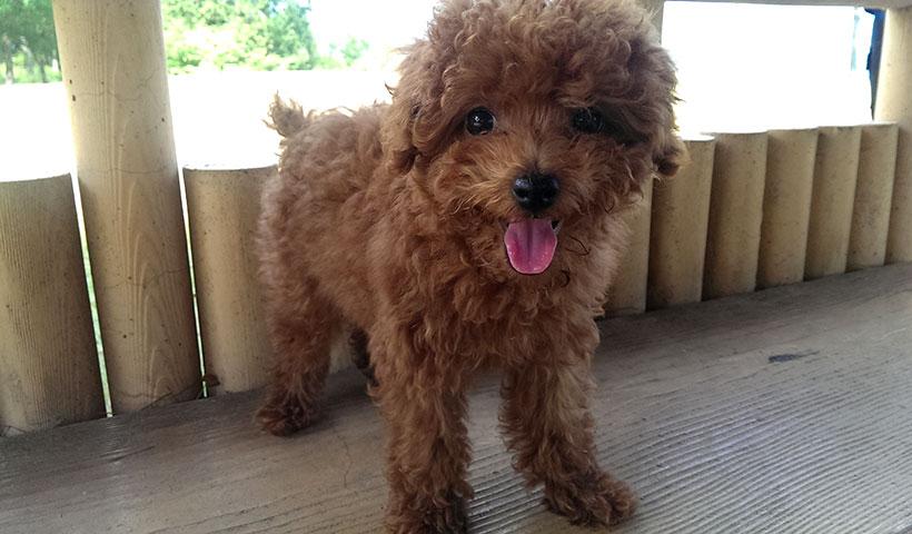 愛犬と幸せに暮らせる安心の家