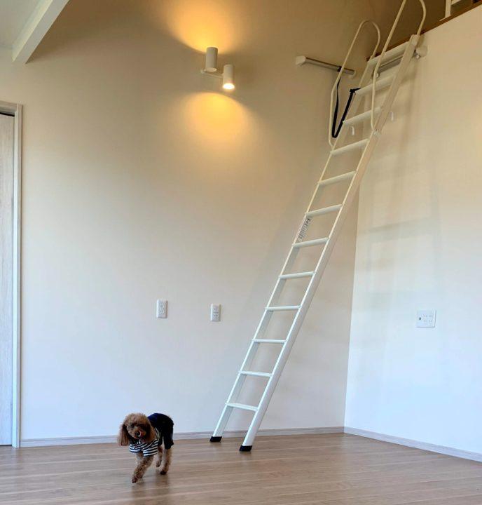 床には小型犬のヘルニア防止にコーティング剤を処理してあります。